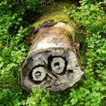 Baumstammquerschnitt mit Aushöhlungen, welche ein Gesicht wiederspiegeln. Kreisrunde Augen mit Pupillen, eine Nase und Strichmund