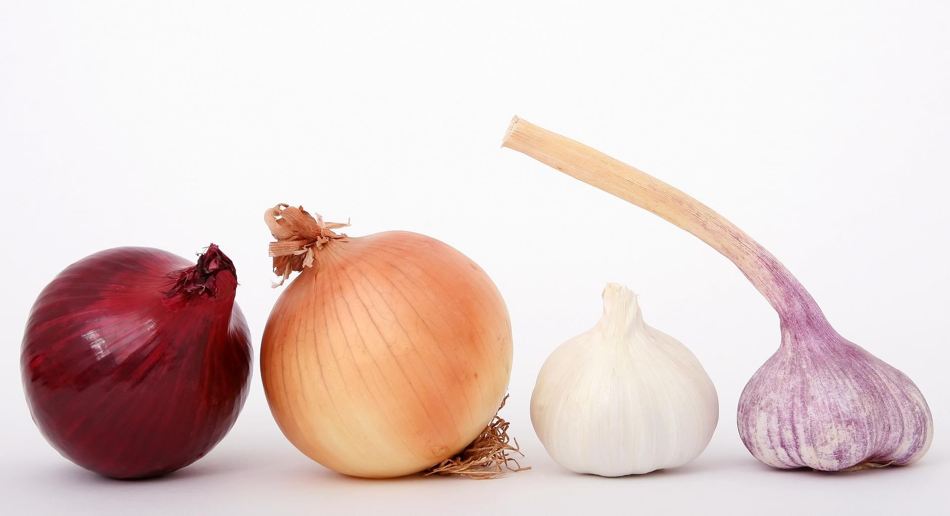 in Reihe: eine rote Zwiebel, eine weiße Zwiebel, ein weißer Knoblauch und ein violetter Knoblauch; Urheber ist Meditations auf pixabay